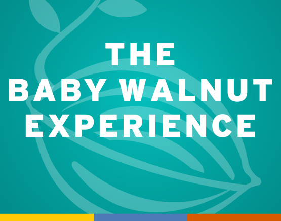 The Baby Walnut Experience